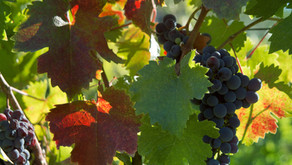 Wed, 5/13/20: The Vine
