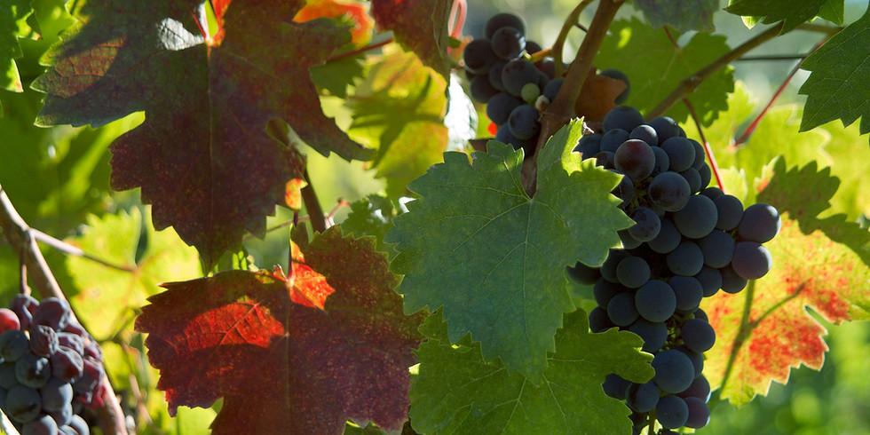 Online Wine Tasting - Georgia & Turkey