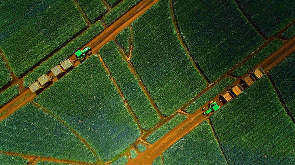 Ananasplantage Costa Rica Drohne.jpg