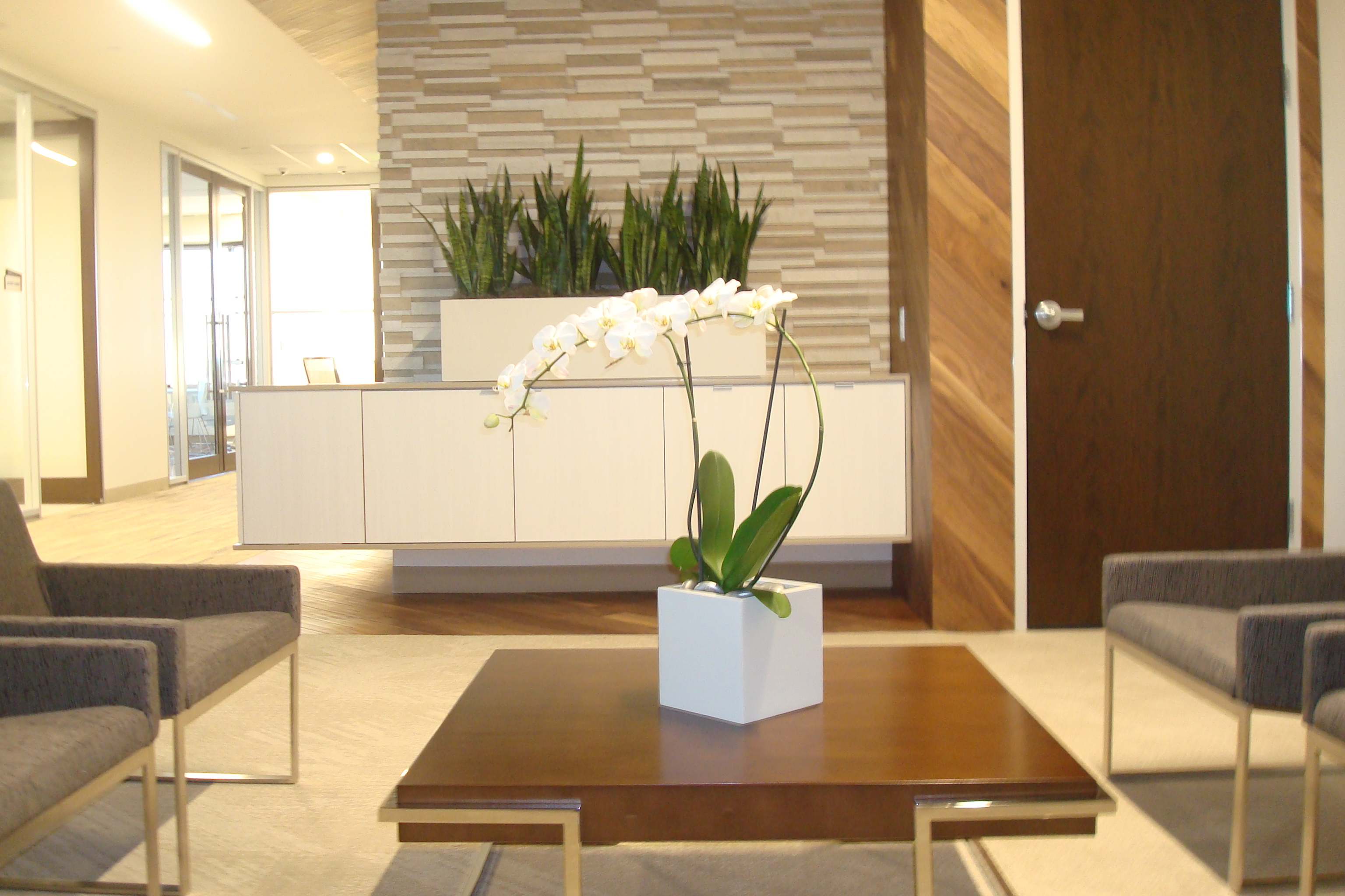 Orchid & Sansaveria