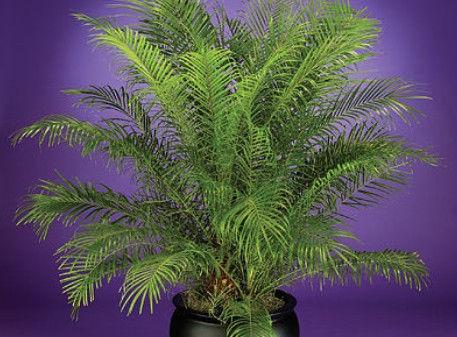 Plant Guide.jpg