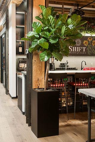 denver indoor plants