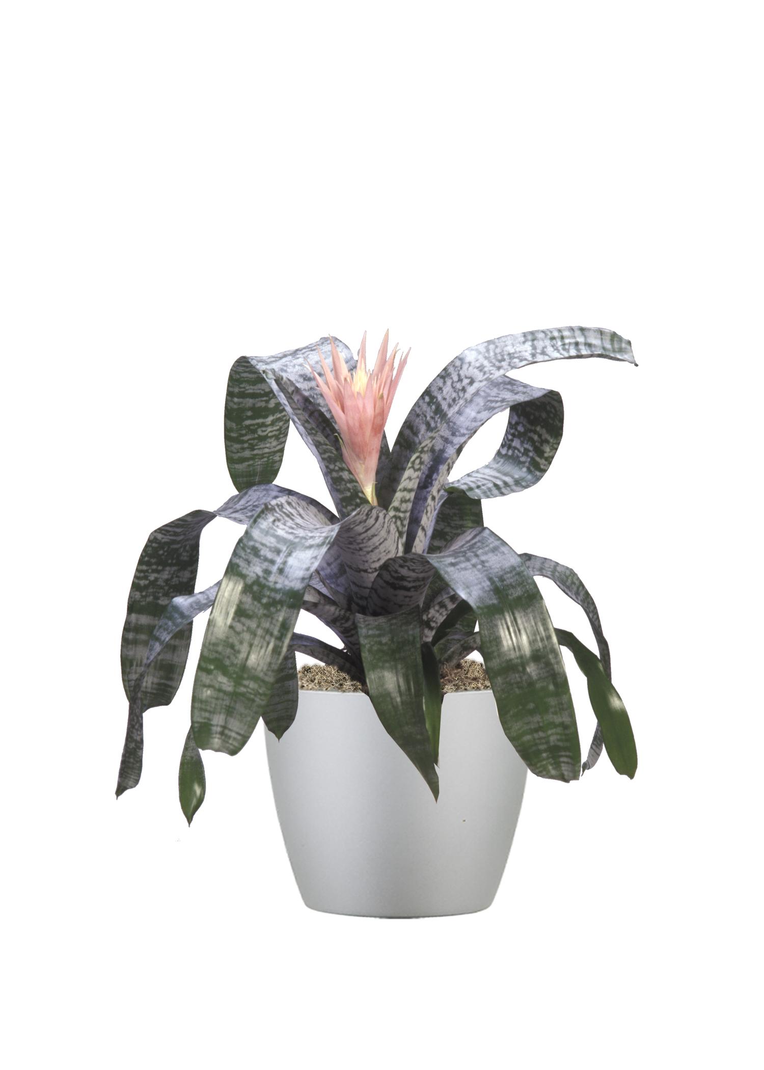 Bromeliad Silver Vase