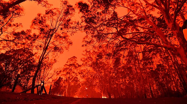 Bushfires.jpg