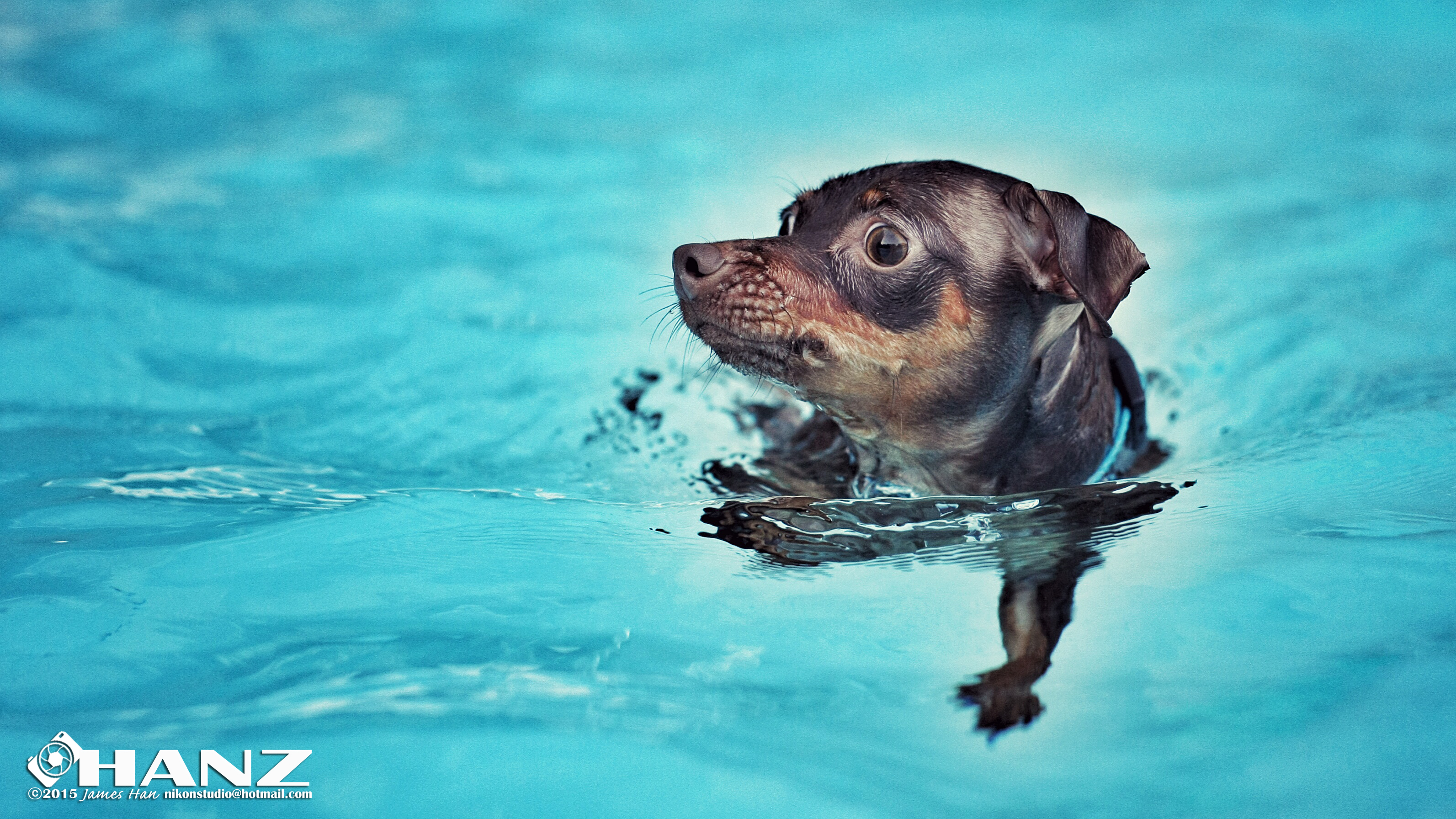 Doggy Swim Day