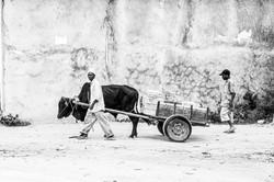 Zanzibar_MG_4962