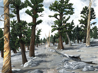 A Stony Forest