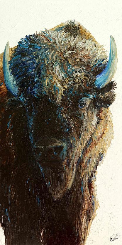 Bison bison.jpg