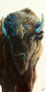 Bison, bison