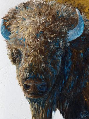 Bull Bison Portrait