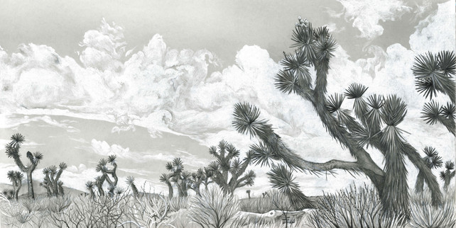 Desert Giants