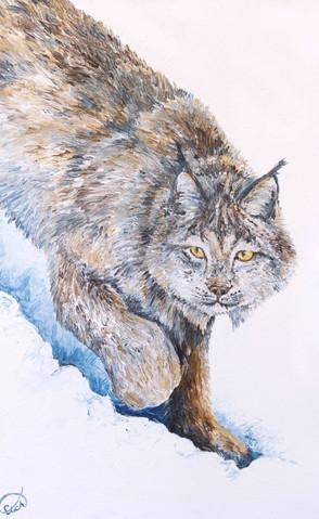 Winter Prowler