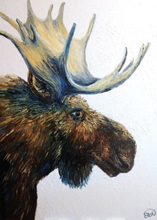Portrait of a Bull Moose