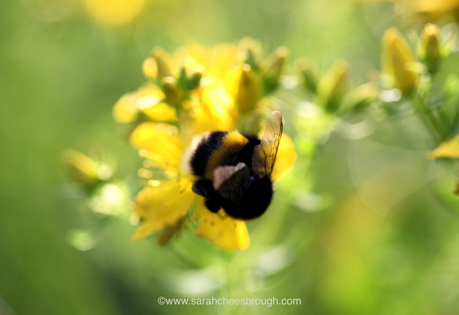 IMG_6169 bee copy