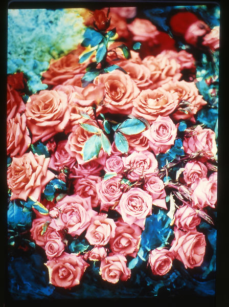 David LaChapelle, 56 Bleeker Gallery: Vibrant Garden, 1985