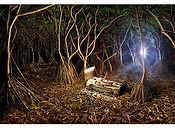 David LaChapelle, Reborn! Nature's Transfusion, 2009