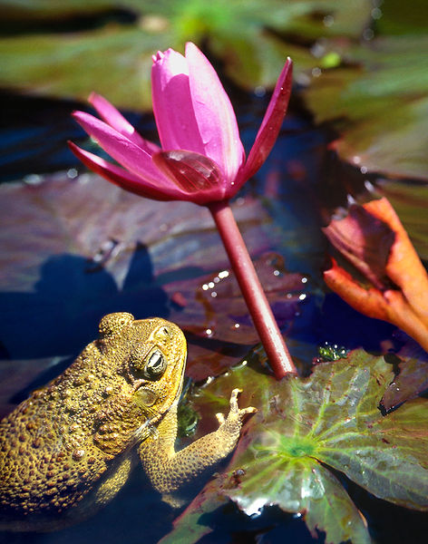 David LaChapelle, The Frog Protects the Flowers, 2007