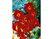 David LaChapelle, Flowers Bloom, 1985