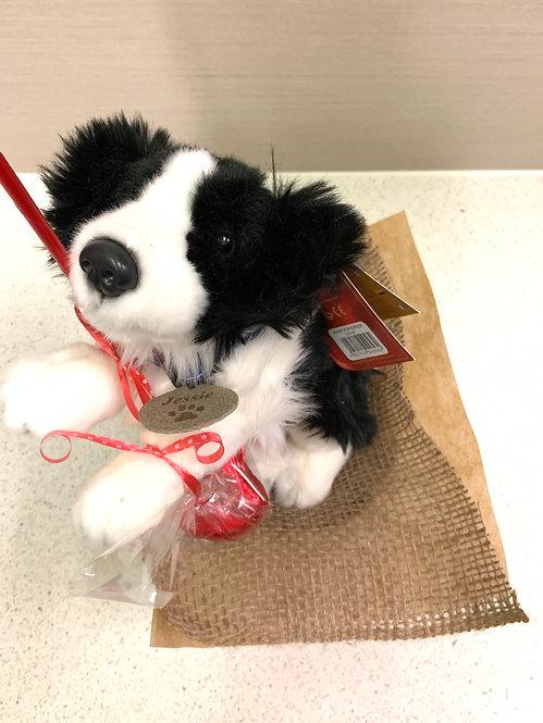 Border Collie - Doggy Love