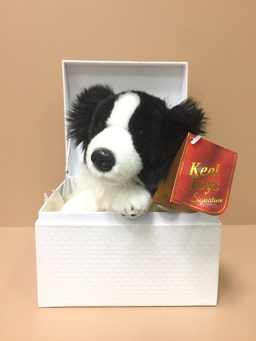 Birthday Gift-Cute Border Collie