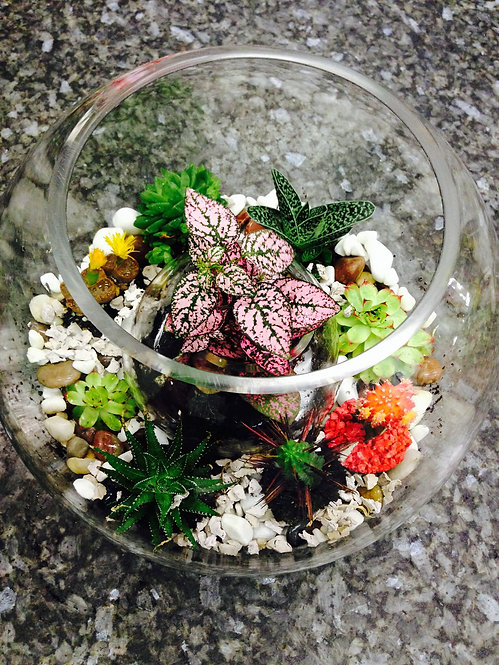 Mixed Terrarium