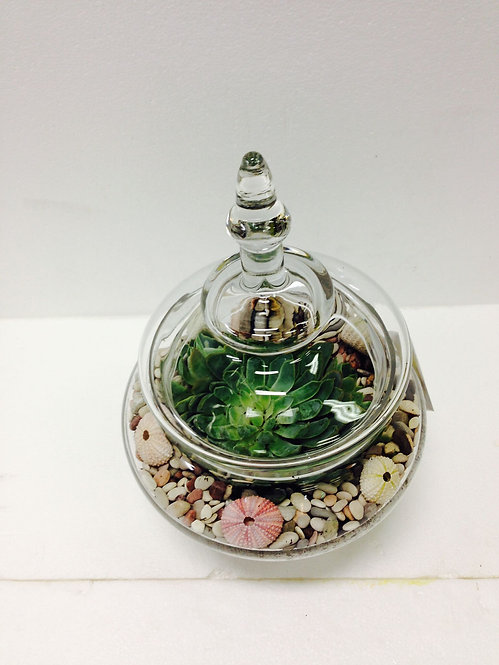 Succulent (with vase)