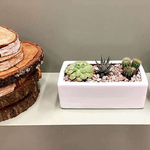 Trio of baby succulents (Potted)