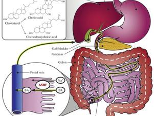 胆汁酸膜輸送体(ASBT)阻害剤に関する総説