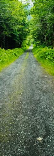Olympic Mountain Backwoods Road