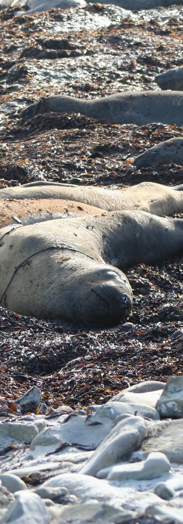 Sea Lion Island Inhabitants