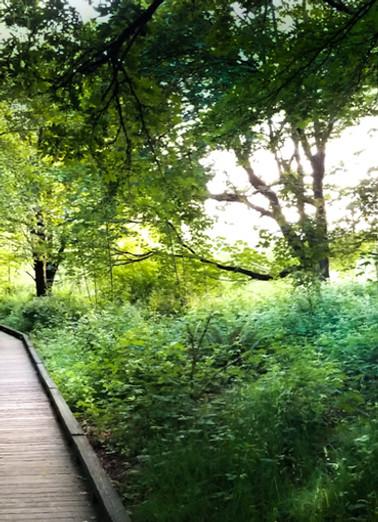 Boardwalk in Trees at Dusk