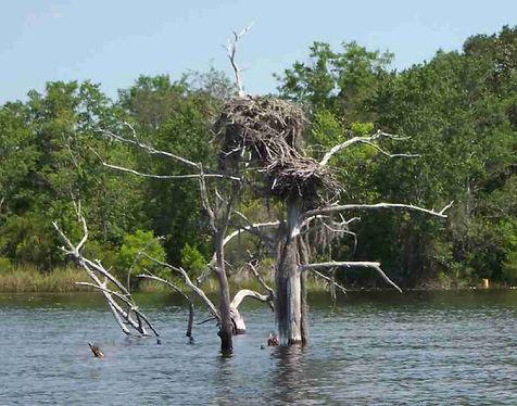 Eagle's nest Deer Pt Lake Apr 06.JPG
