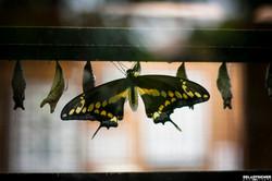 Blijdorp Vlinder 2
