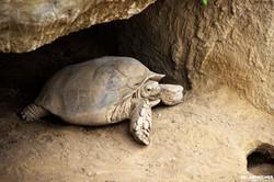 Blijdorp Schildpad