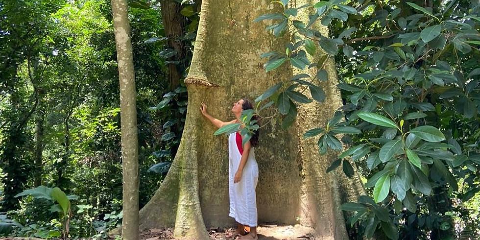 Terapia Florestal no Parque Burle Marx