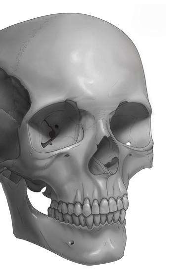 Skull Tone Illustration