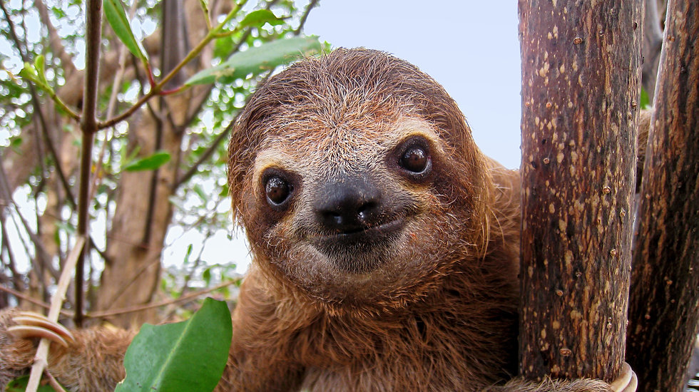 Baby Sloth_AdobeStock_64671451.jpeg