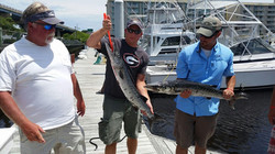 Wise fishing charter barracuda