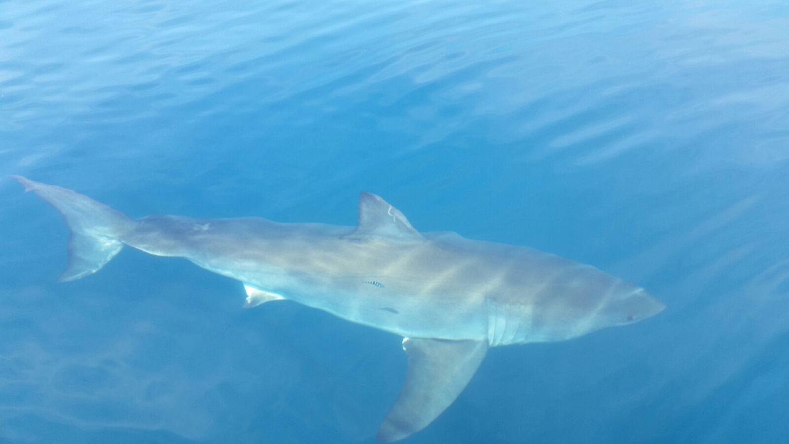 Big shark seen on charter