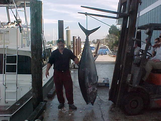 Captain Steve with big Blue Fin Tuna