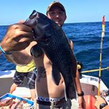 Big Black Sea Bass
