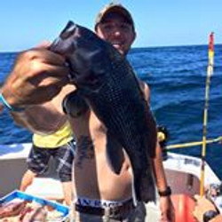 Big Black Sea Bass