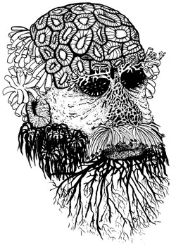 Darwin_Koralleb