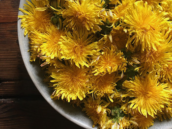 The bitter truth about Dandelion