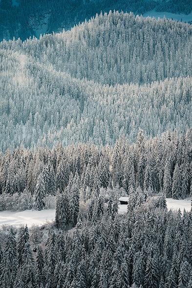 Verschneite Bäume in Flims