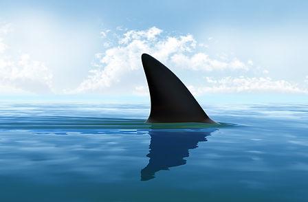 shark-finning-Large.jpg