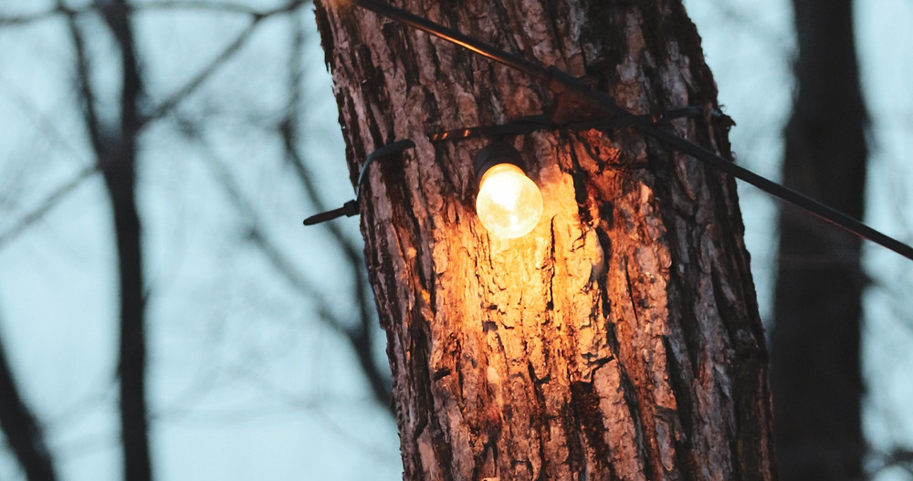 Small lit lightbulb attached to tree trunk