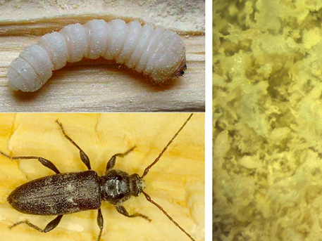 Scientists Recycle Termite Waste Into Circular Economy 3D Printing Material