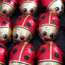 Chocolate ladybirds