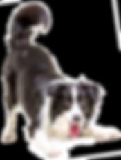 dog walkers doncaster